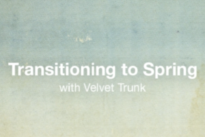 Transitioning to Spring, with Velvet Trunk Boutique